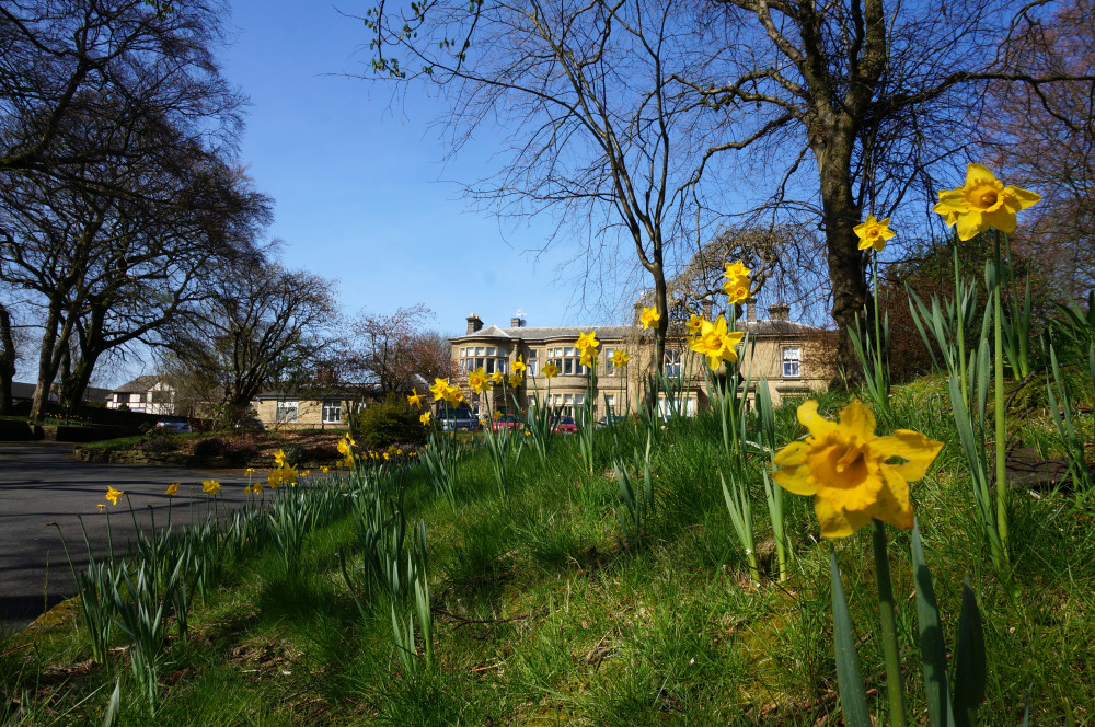 turfcote with daffodils